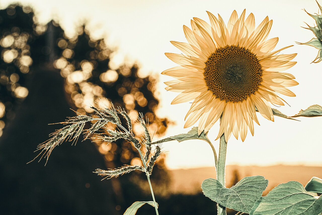flower, flowers, and nature image