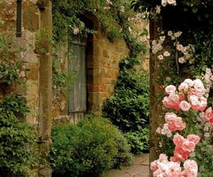 beautiful, rosas, and flowers image