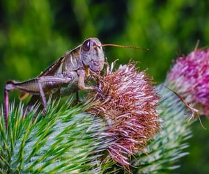 beautiful, bugs, and insects image