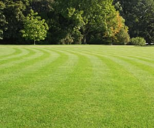lawn maintenance service image