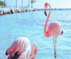 flamingo, sea, and wallpaper image