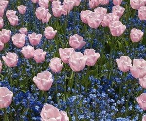 Tulips ⚘⚘