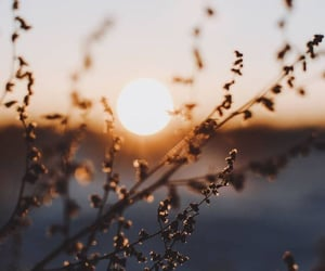 focus, sunset, and nature image