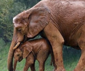 animal, elephant, and love image