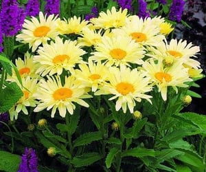flowers, beautiful flowers, and sun flower image