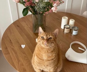 cat, decor, and flowers image