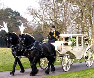 horses, bride horse trolley, and horse drawn carriages image