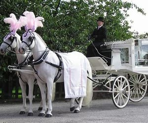 hearse and horse drawn carriages image
