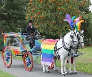 horse drawn carriages and rainbow hearse image