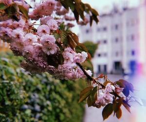flower, dark vintage, and london image