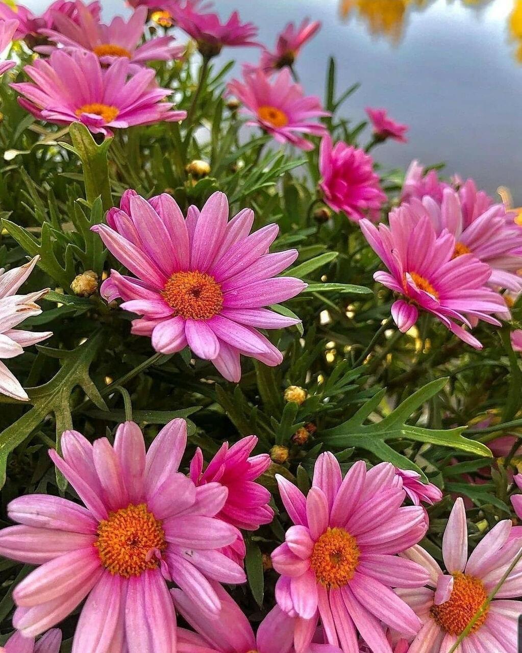 belleza, flores, and primavera image