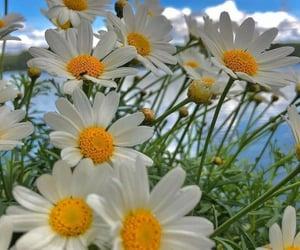 belleza, flores, and margaritas image