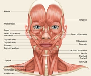 anatomy, dentistry, and face image