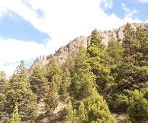 arboles, naturaleza, and montaña image