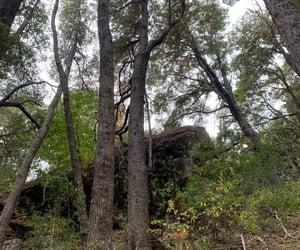 arboles, sur, and bosque image