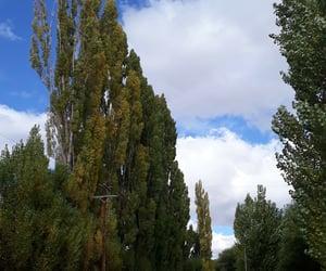 arboles, naturaleza, and patagonia image