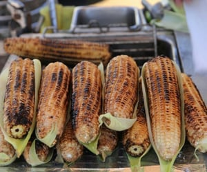 corn, food, and elote image