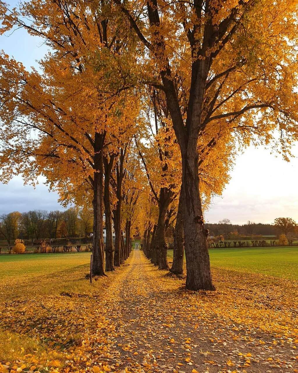 autumn, exteriores, and otoño image