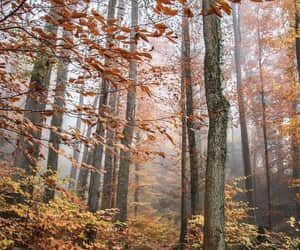 autumn, exteriores, and forest image