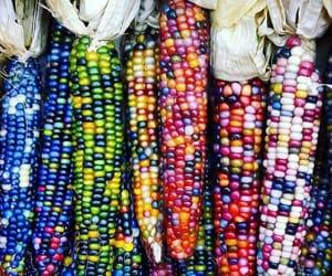 corn seeds and organic indian image