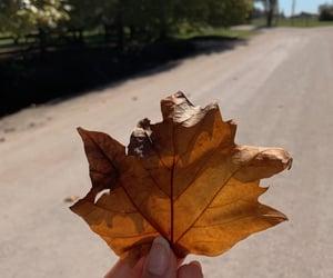 aesthetic, autumn, and farm image