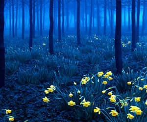 germany and forest image