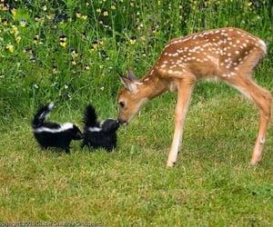 animal, deer, and skunk image