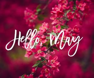 hello spring and hello may image