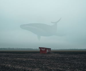 mood and whale image