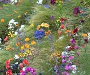 flowers, spring, and rainbow image