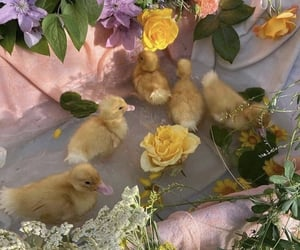 duck, animals, and flowers image