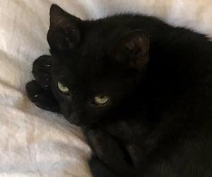black cat, cat, and Gatos image