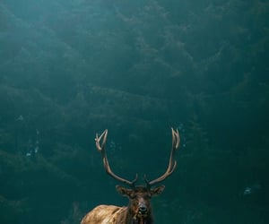 aesthetic, deer, and iphone image
