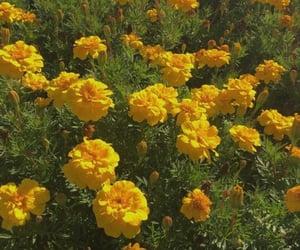 aesthetic, hufflepuff, and flowers image
