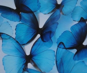 blue, aesthetic, and butterfly image