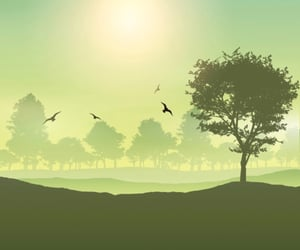 birds, dreamy, and landscape image