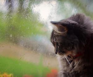 animals, cats, and rain image