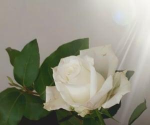 fleur and magnifique image