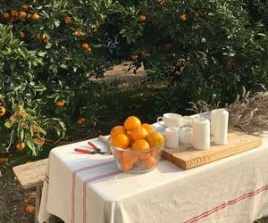 aesthetic, clementine, and orange image