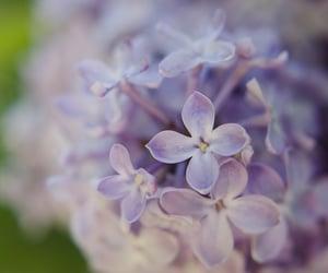 bokeh, purple, and flowers image