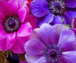 aesthetic, anemone, and bloom image