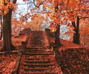 autumn, orange, and paisajes image
