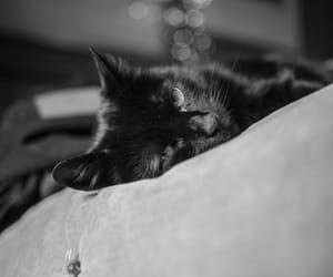animal, cushion, and pillow image
