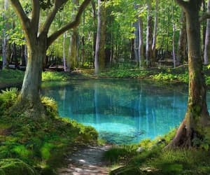 nature, forest, and water image