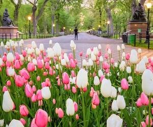 spring blooming image