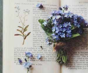 flowers and forget me not image