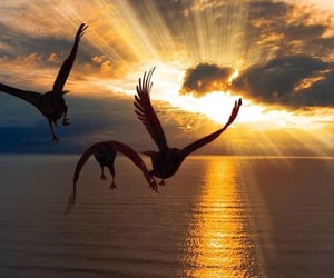 bird, sunrise, and birds image