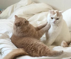 animal, cat, and beige image