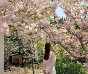 cherry blossom, girl, and nature image