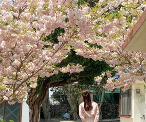 cherry blossom, girl, and green image